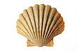 Sea Shell Cardboard Cutout Standup Prop